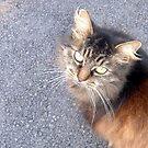 Cat eye. by MorbidPuppet