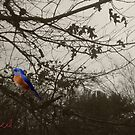 Beautiful Bird in Tree by storecee