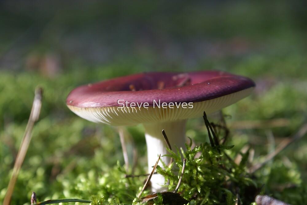 Mushroom by Steve Neeves