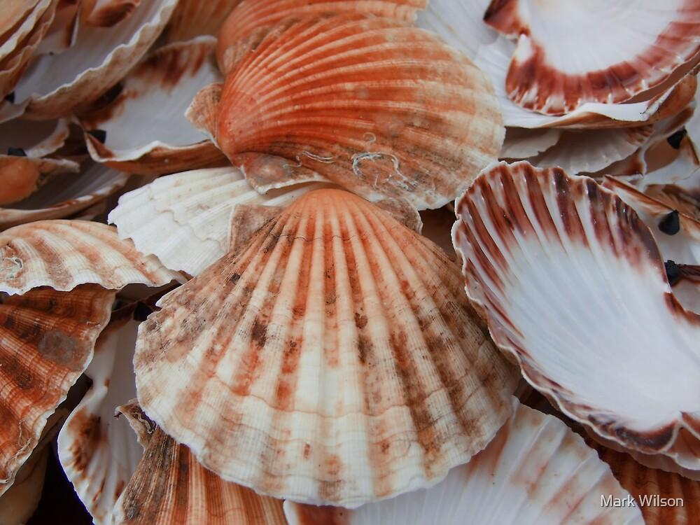 Sea Shells by Mark Wilson