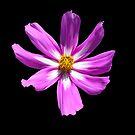 The Color Purple by Michael Reimann