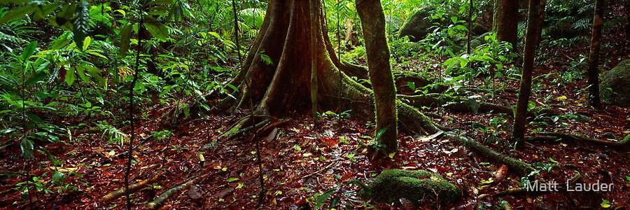 Mossman Gorge, Tropical Queensland by Matt  Lauder
