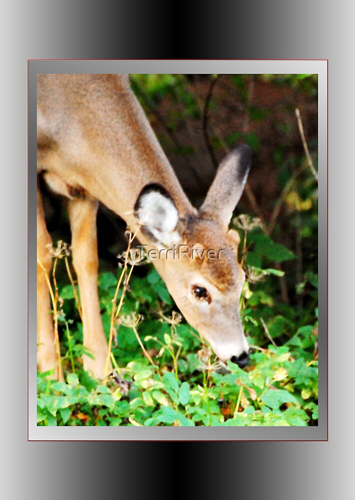 My First Antlers Are Almost Here! (card) by TerriRiver