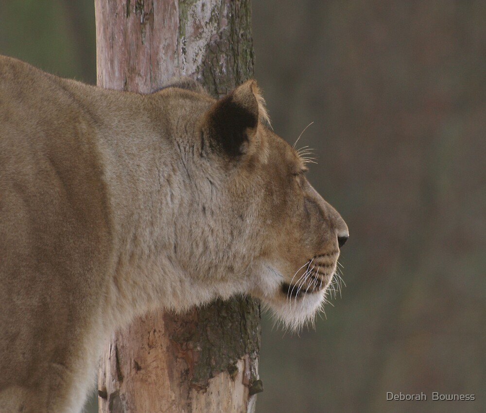 Majestic by Deborah  Bowness