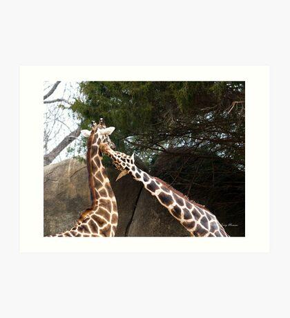 Giraff Love Art Print