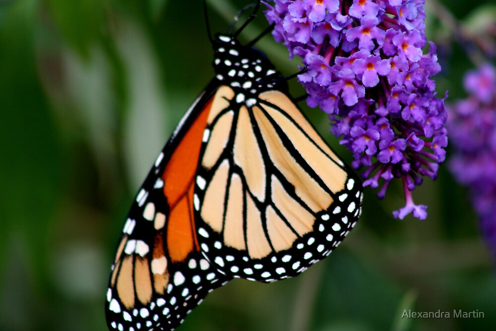 Butterfly on it's own bush by Alexandra Martin