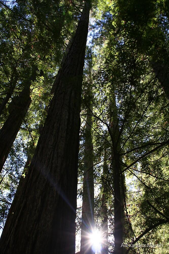 Redwoods Tower by Alexandra Martin