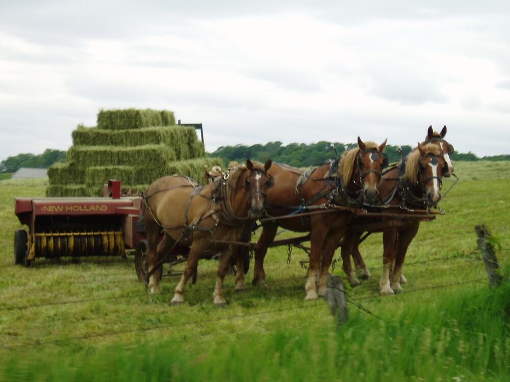 Ohio Amish Work Horses by Deborah Stewart