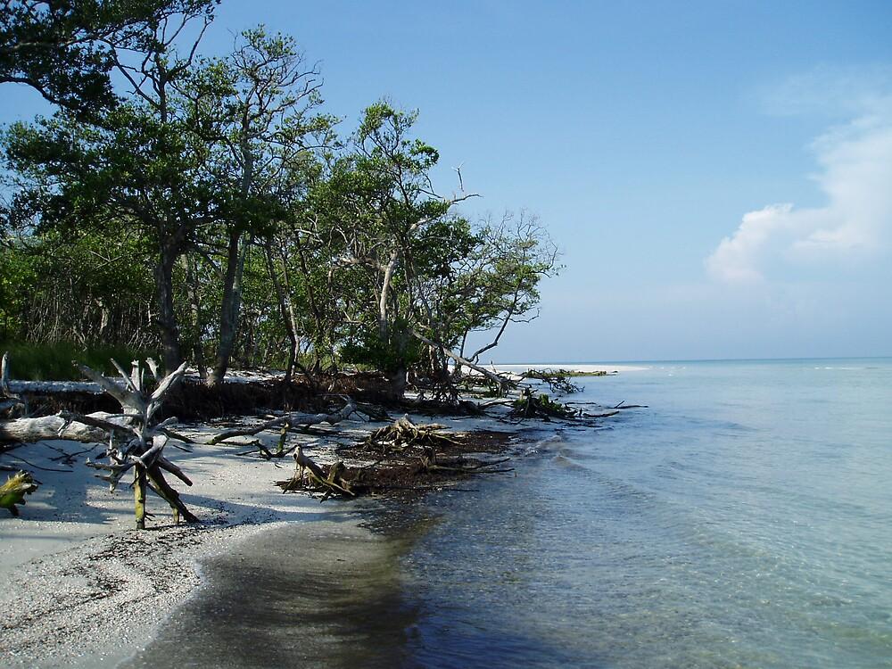 Caladesi Island by Deborah Stewart