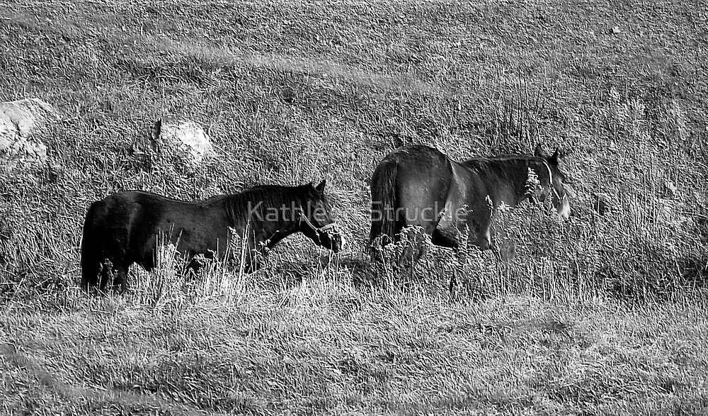 Two Horses In Field by Kathleen Struckle