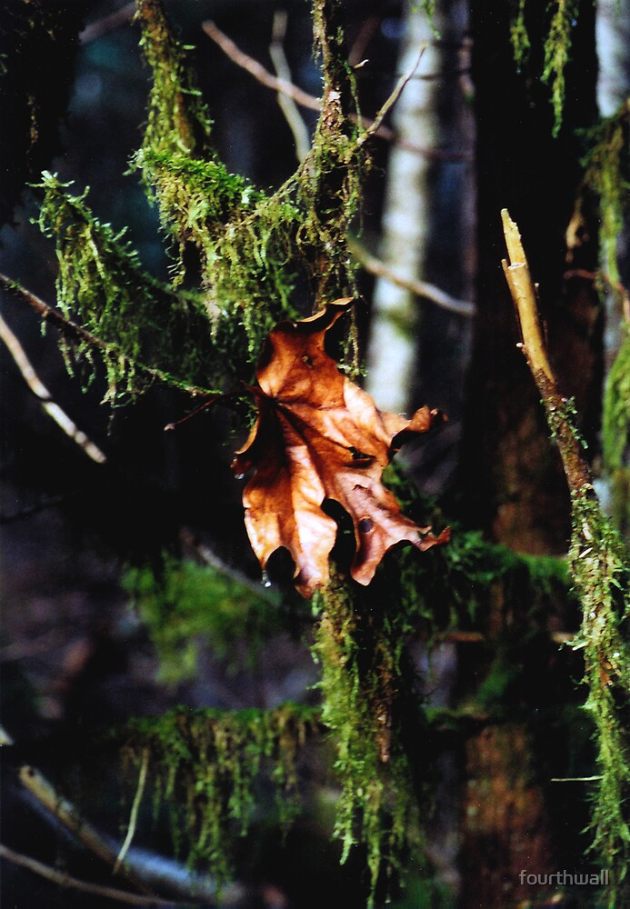 Alaska Leaf by fourthwall