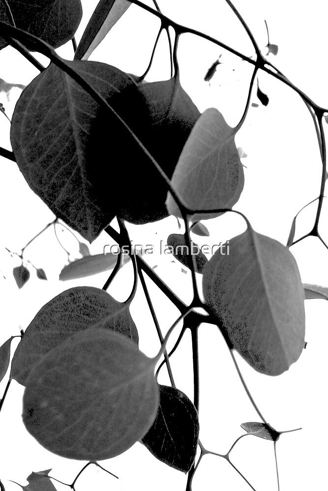 gum leaves by Rosina  Lamberti