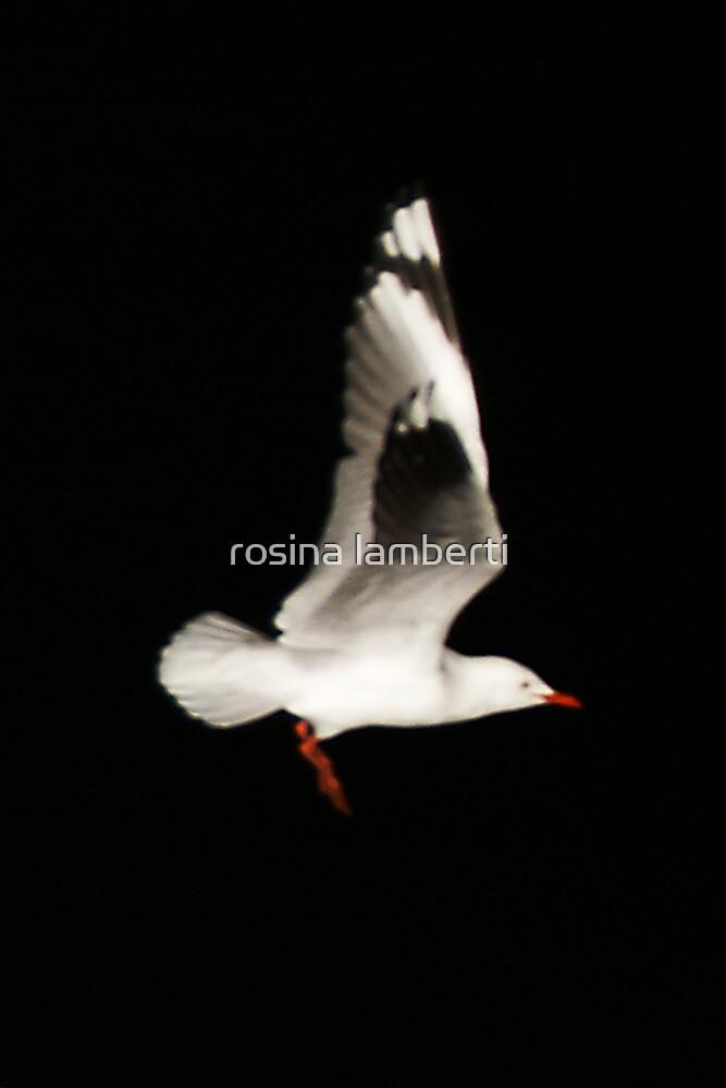 seagull by rosina lamberti