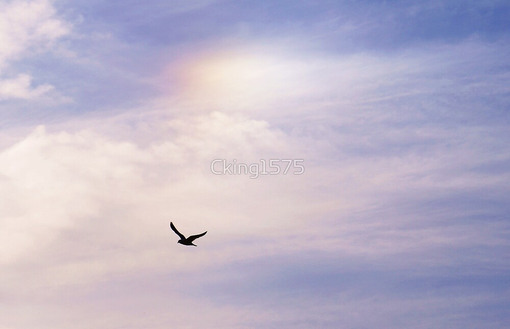 Rainbow Freedom by Cking1575