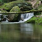 Where the brookies live by coopphoto