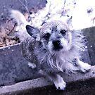 Winter doggo by Katie (Pockaru)