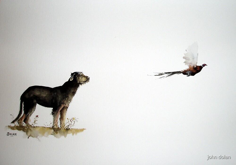 Flight of the Pheasant by john dolan