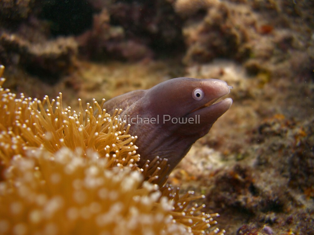 Baby Moray... by Michael Powell