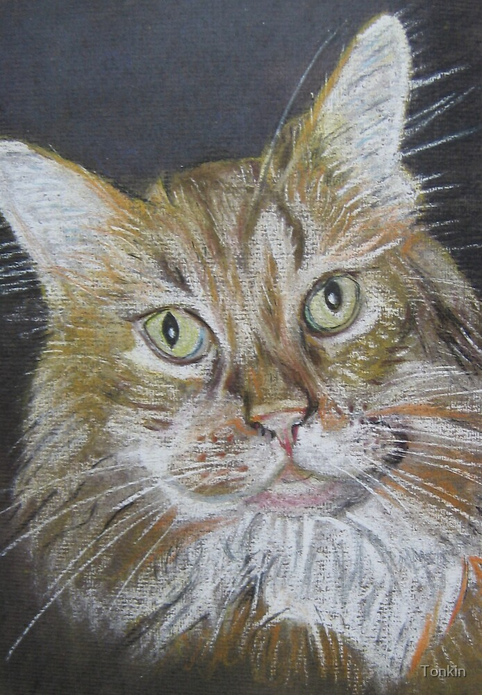 Ginger Cat by Tonkin