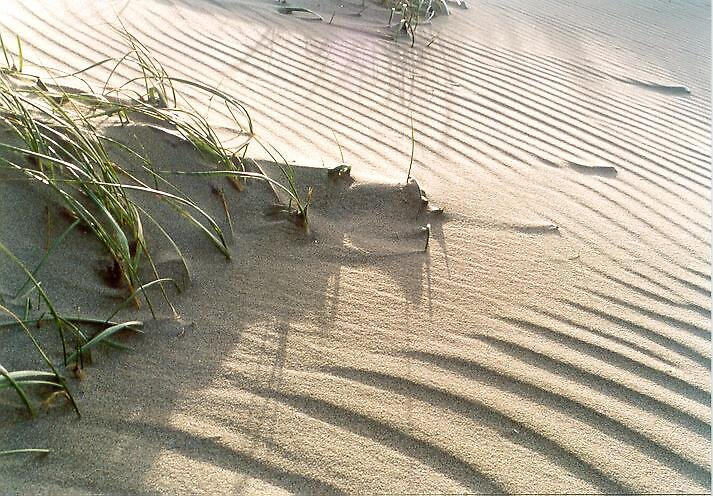 Sandshadow by Gerard van den Berge