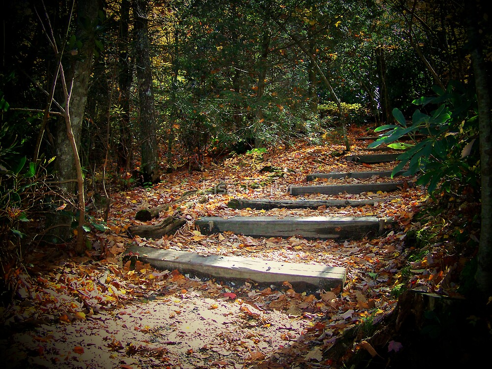 Wooded Staircase by Lisa Taylor