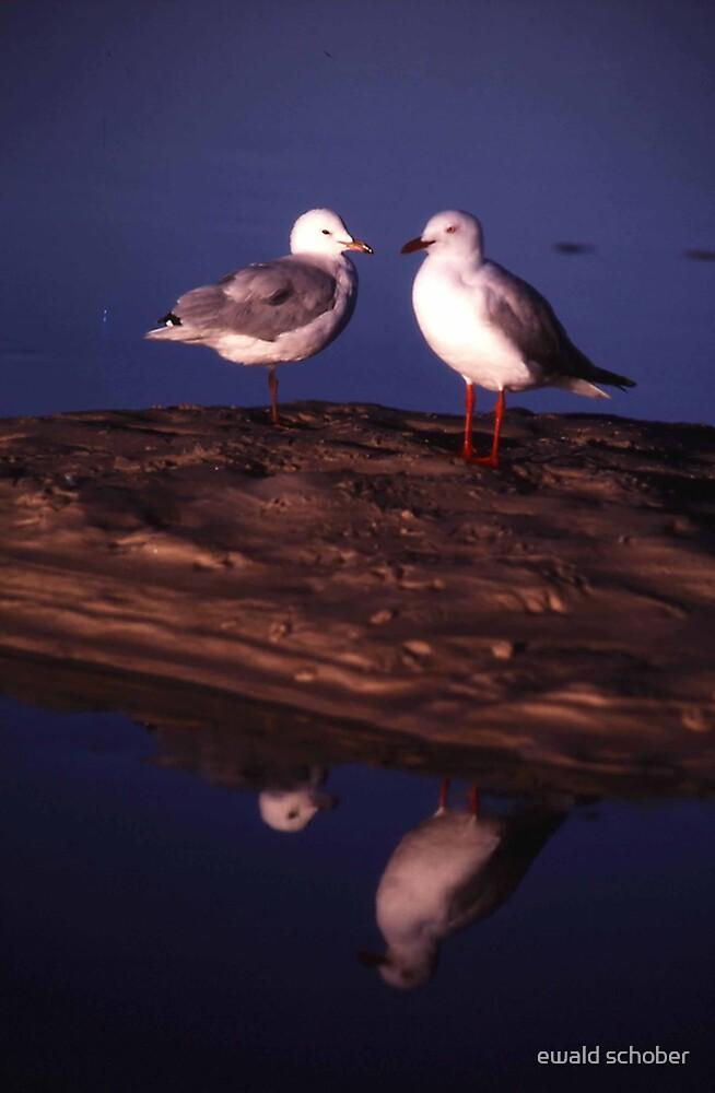 gulls by ewald schober