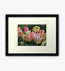 most amazing tulips! Framed Print