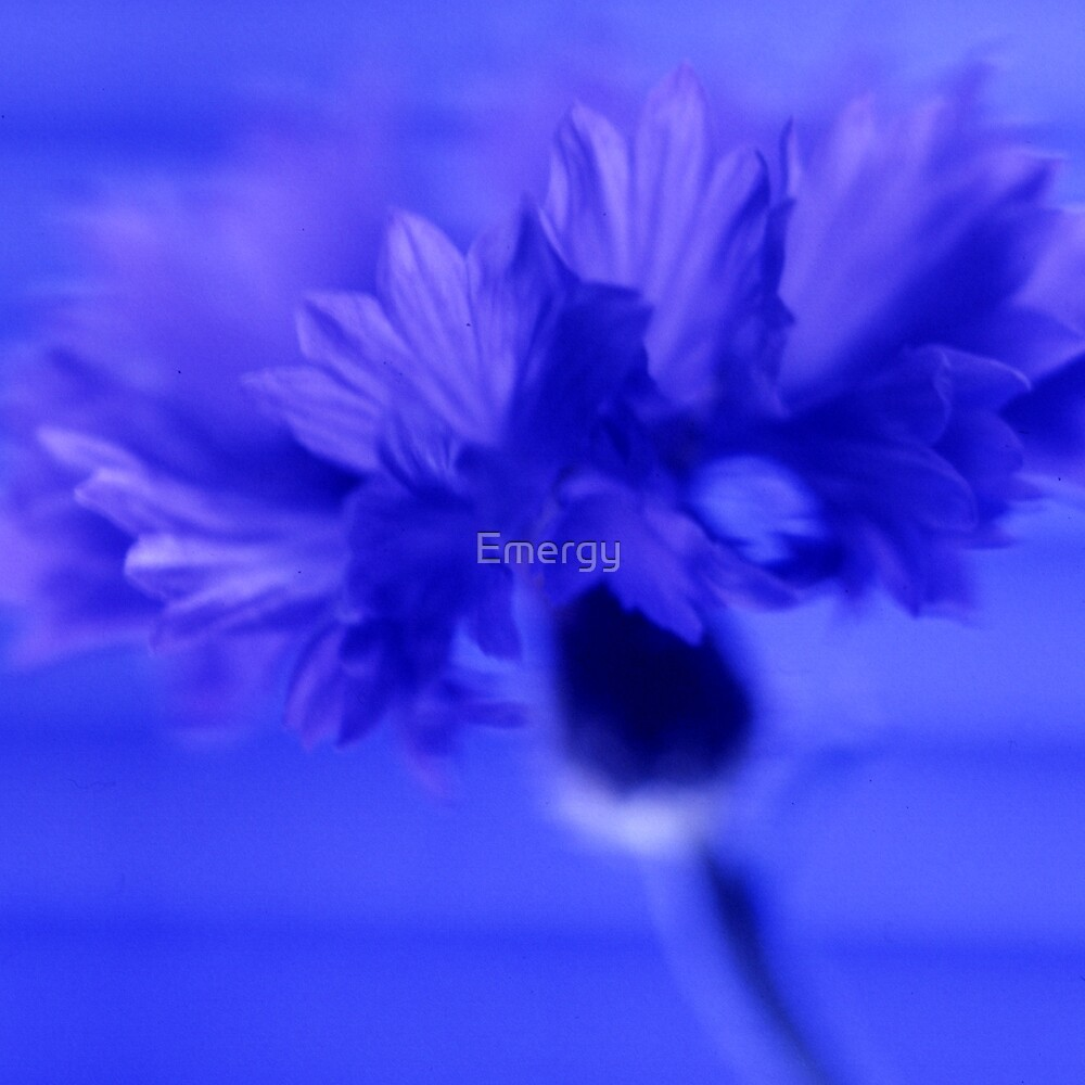 Rainbow flowers Blue cornflower 12 by Emergy
