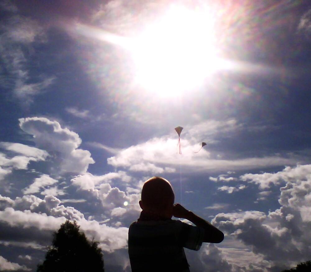 Fly in the Sun by Allan Gowen