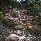 Wandering Koishikawa Korokuen by Chris Allen