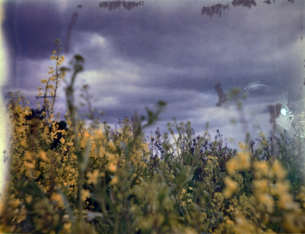 Sauvie Island Yellow Flowers by jalexanderart
