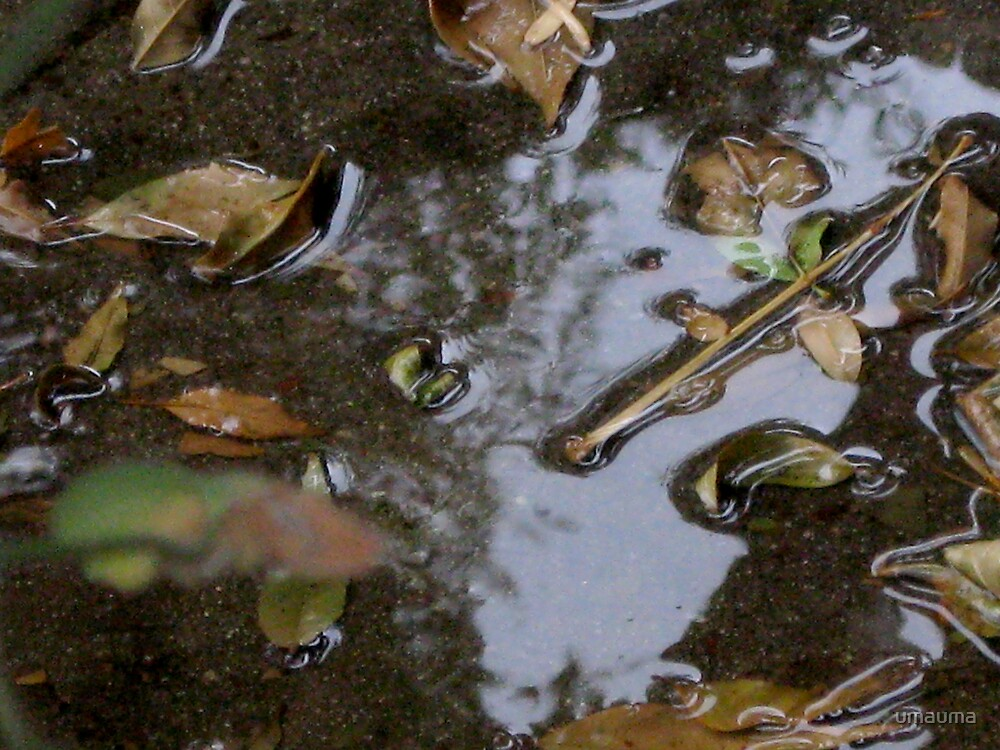 wet leaves by umauma