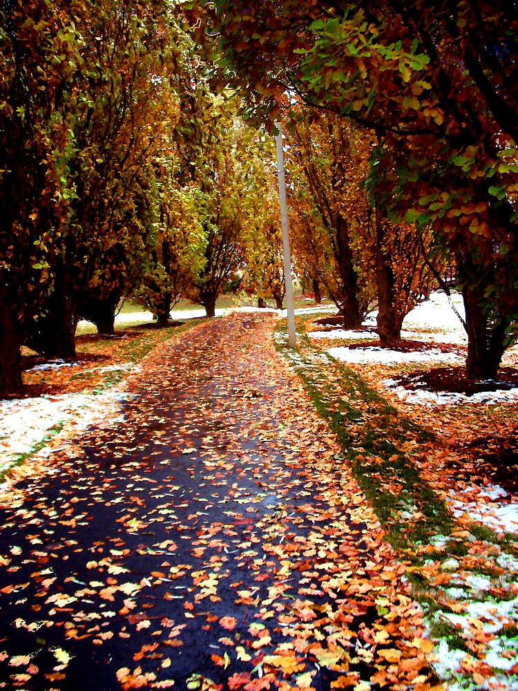 All Seasons Pathway by nikspix