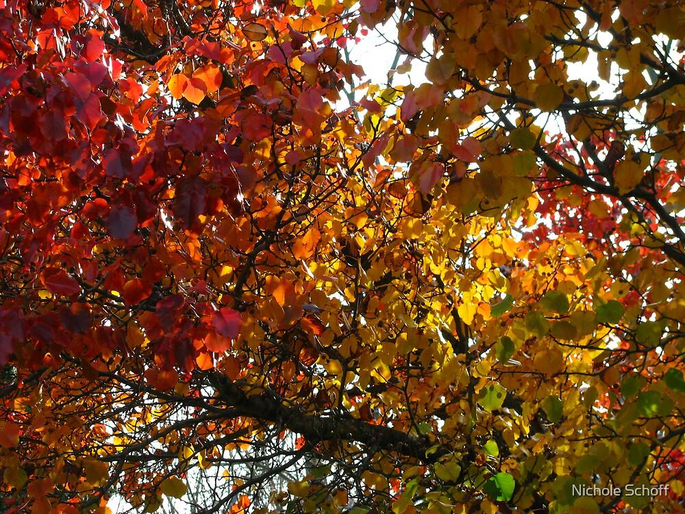 Lasting Autumn  by Nichole Schoff