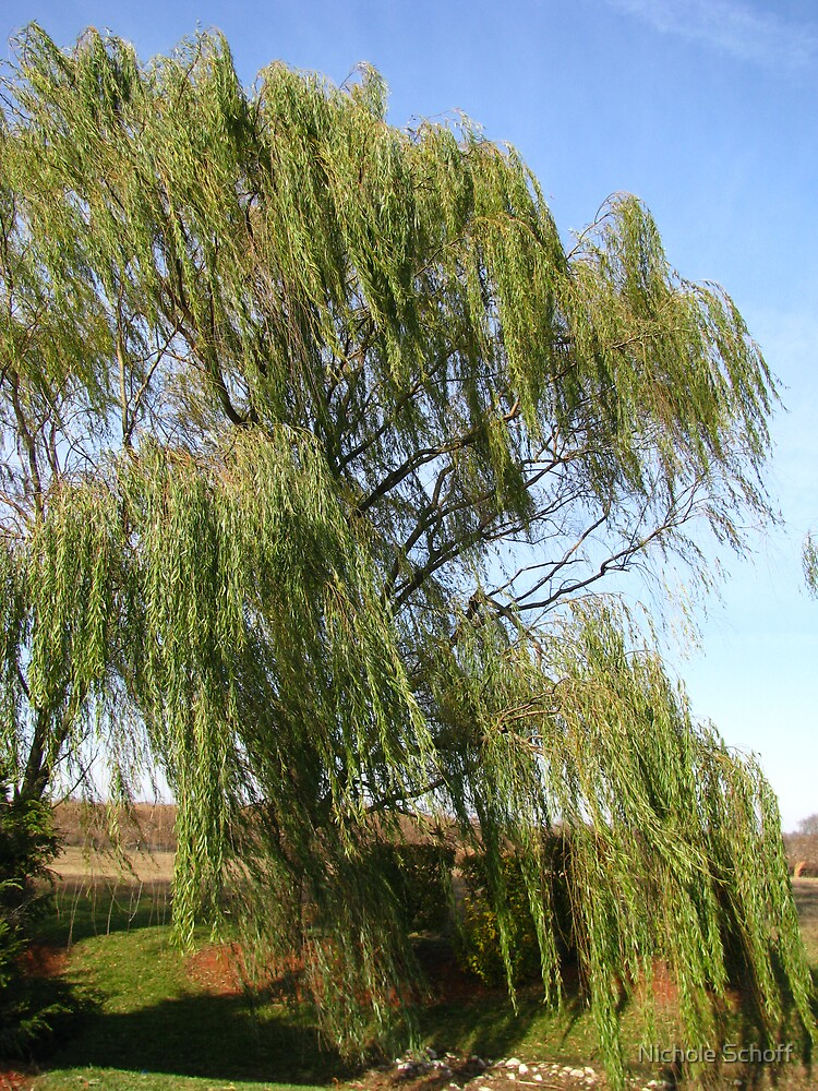 Willow by Nichole Schoff