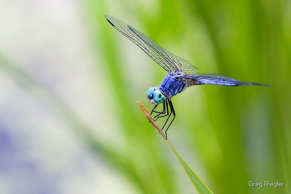 Dragonfly by Greg Riegler