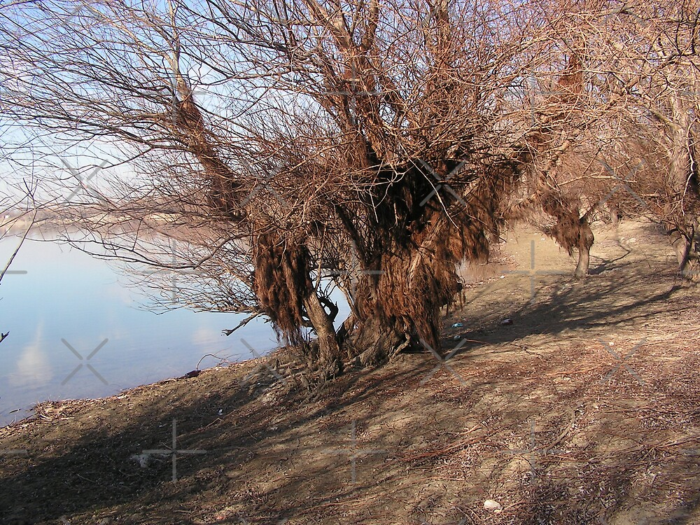 Bearen willow by queensoft