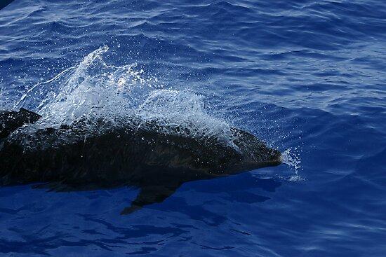 Dolphin Breach by Billy Lucero