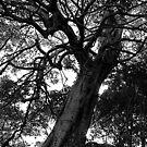 Tree by Sara Lamond