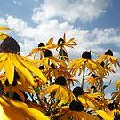Flowers by hansberndl
