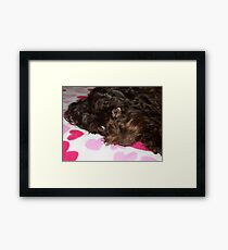 Puppy watching telly Framed Print