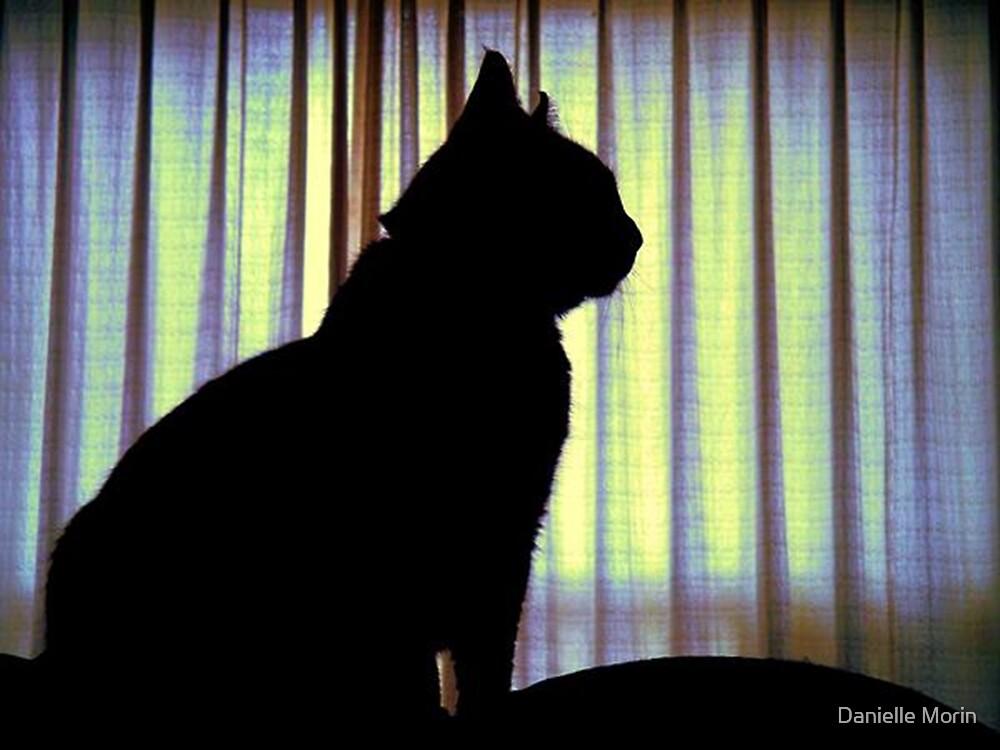 Feline Silhouette by Danielle Morin