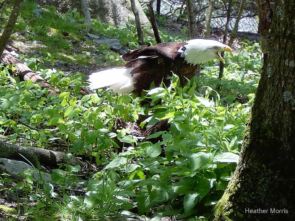 Screamin Eagle by Heather Morris
