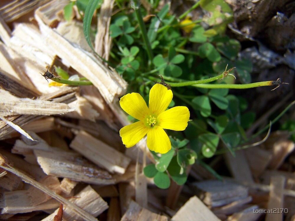 yellow wildflower/weed by tomcat2170