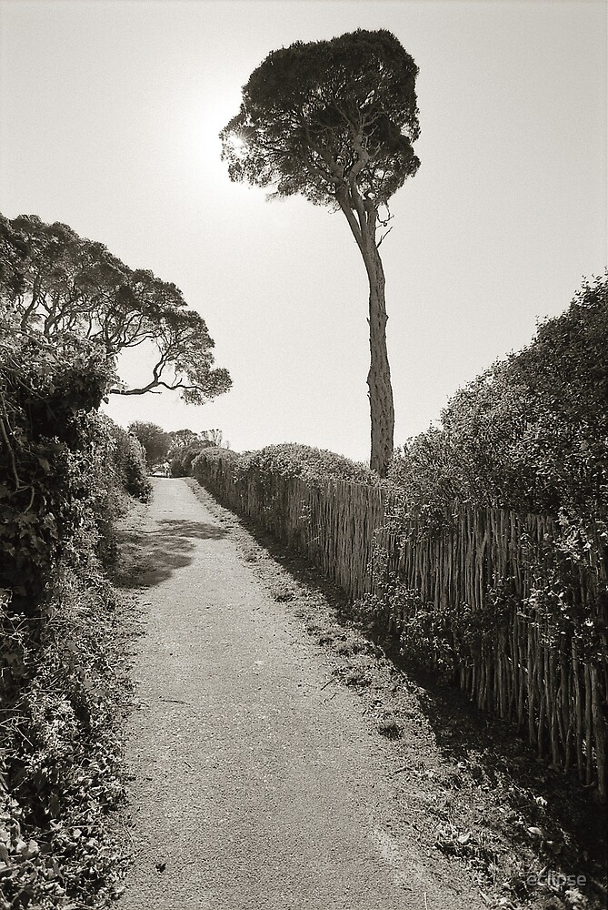 pathway by eclipse