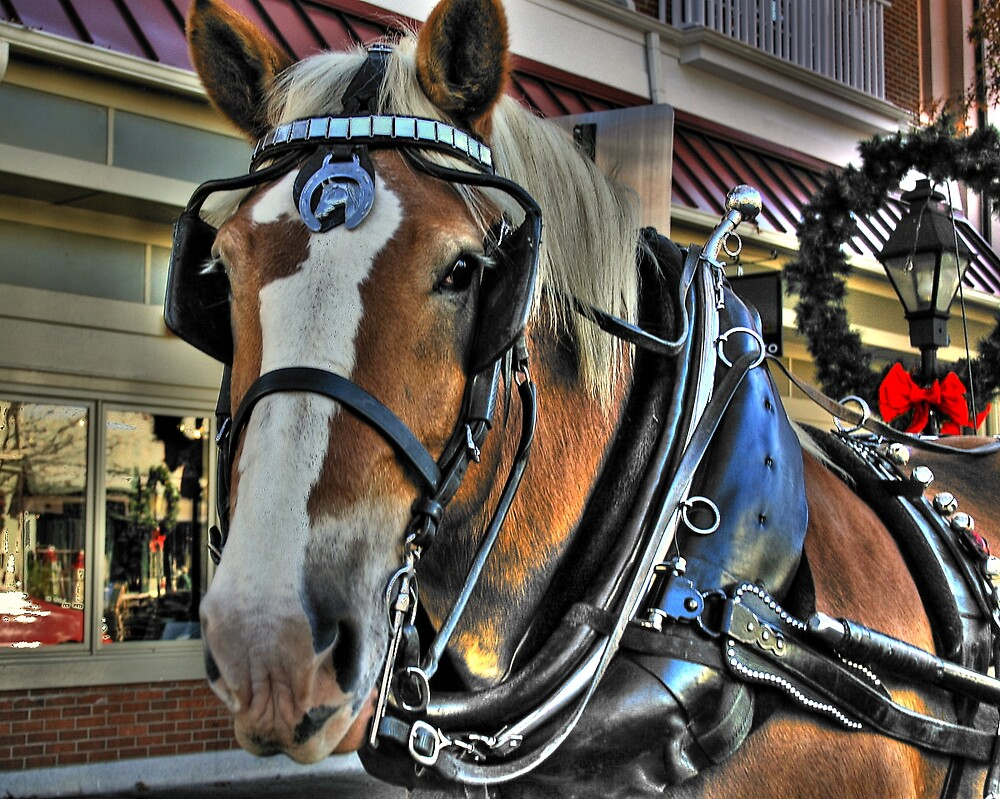 Sleigh Horse by Juliebcole