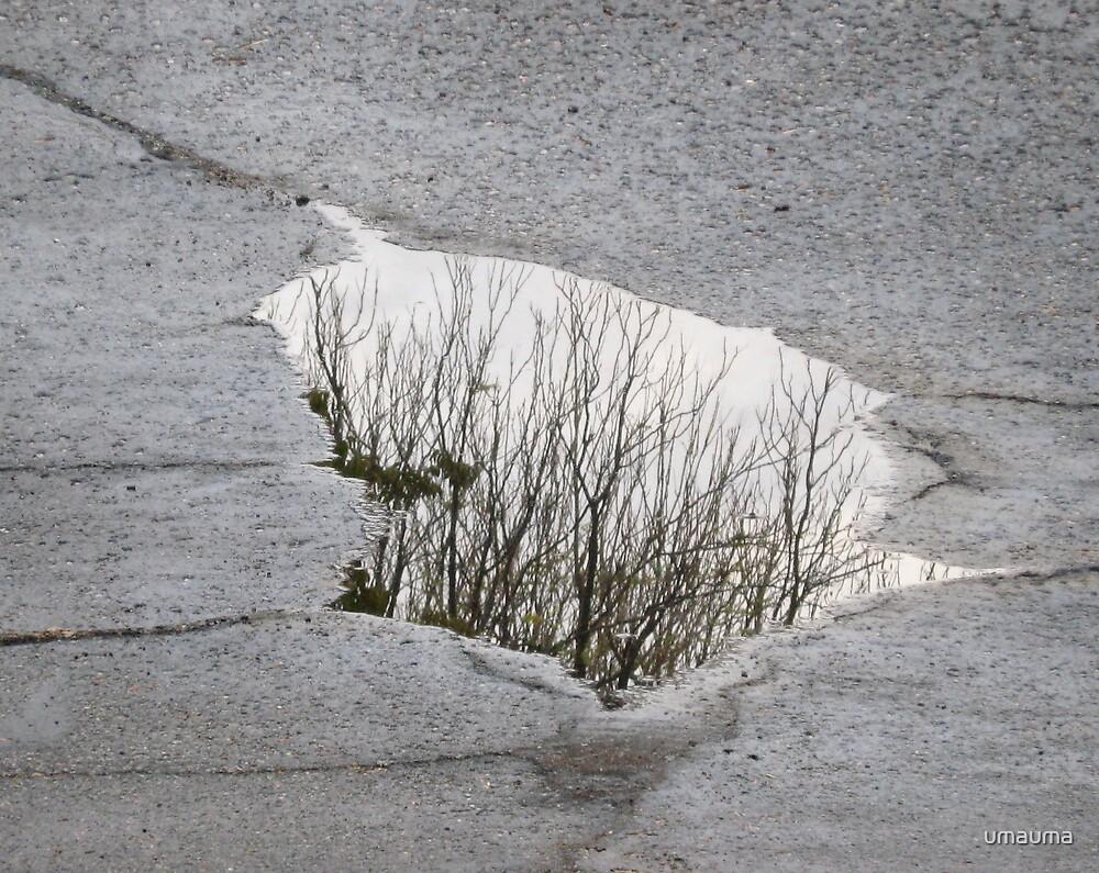 Road Reflection - 1 by umauma