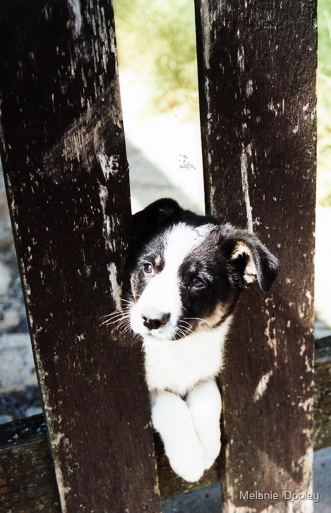 Just a puppy by Melanie  Dooley