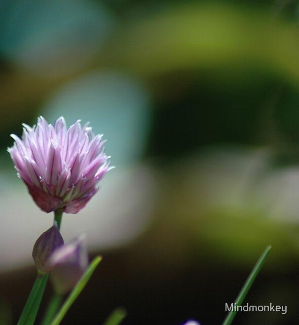 Chive by Mindmonkey