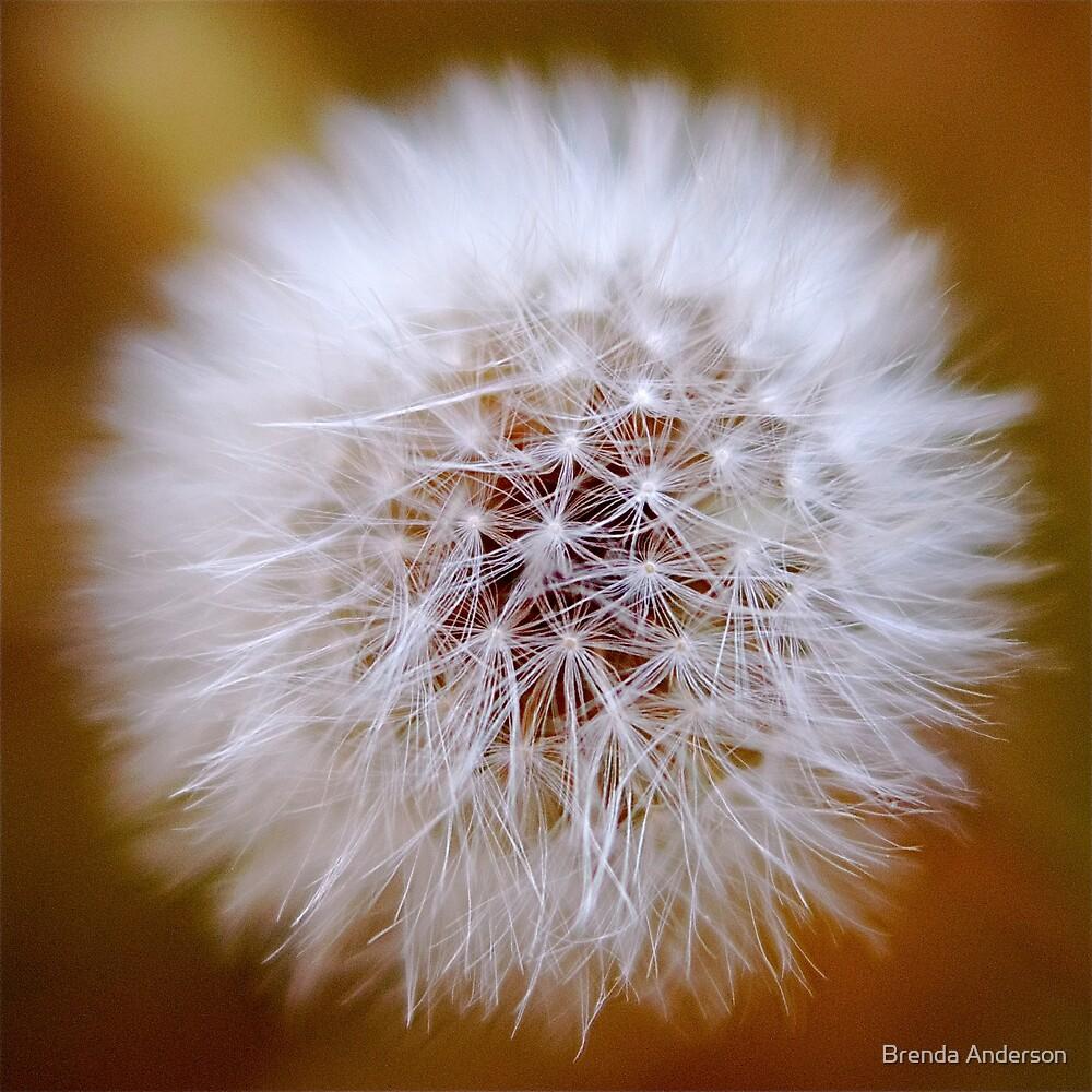 fluff by Brenda Anderson